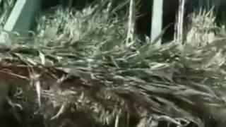 EL GAP FF Kuchia S6 3 EEL Farming