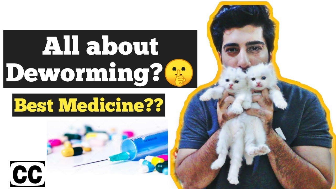 Cat Deworming How To Deworm Cats And Kittens Symptoms Of Cat Worms Cat Deworming Is Necessary Youtube