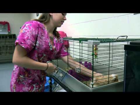 Academy of Veterinary Assisting Hudson High School