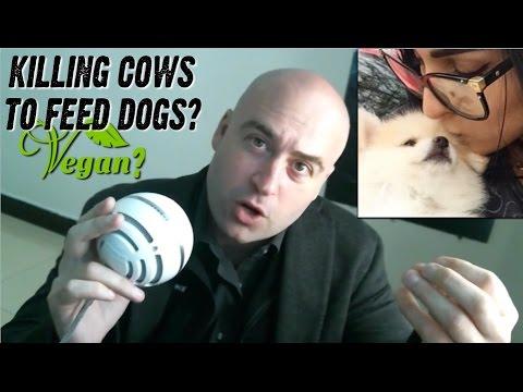 #DOGGATE: An Analysis (Vegan Gains vs. Vegan Cheetah)