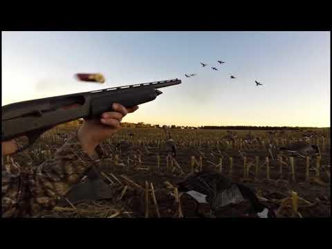 Охота на гуся,незабываемые налеты.