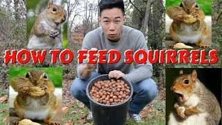 HOW TO FEED SQUIRRELS