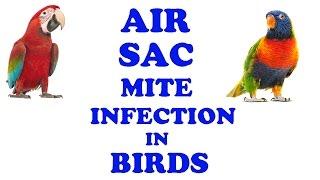 Air Sac Mite Infection In Birds | Birds Disease | Dr Nagender Yadav