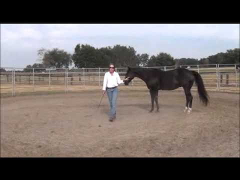 How to Develop a Smooth, Relaxed Canter, Part I