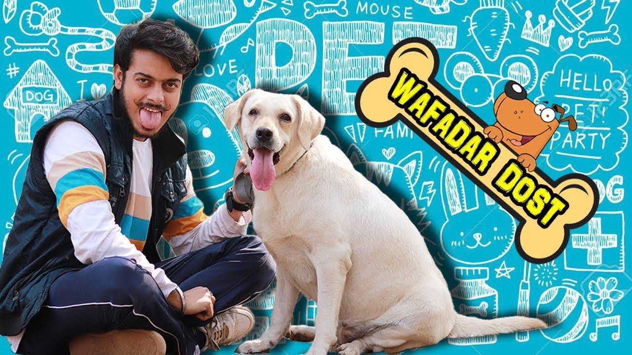 Download WAFADAR DOST || Cute Relationship Between DOG and HUMAN || PREM BHATI