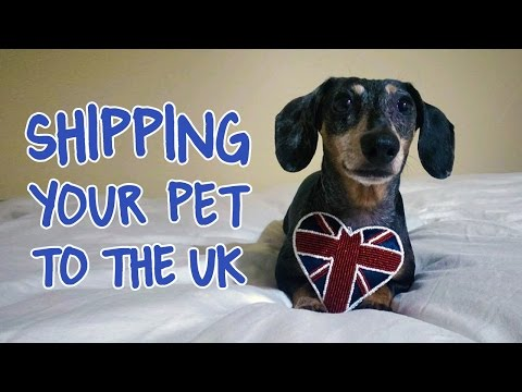 How to Move with Your Pet to the UK (Advice on How to Ship/ Import a Cat or Dog)