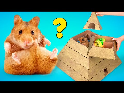 Hamster Tries To Pass 6-Level Pyramid Maze From Cardboard