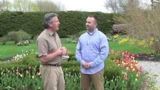 Planning A Flower Bulb Garden - Tips For Beginners.