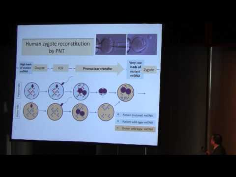 Techniques in Germinal Vesicle, Spindle and Pronuclear Transfer | Hui Liu