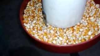 Repeat youtube video como hacer comedero de Pollos casero PVC