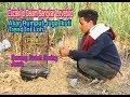 Cucak Ijo Dalam Sangkar Lovebird Akar Rumput Juga Ikuti Trend Ini Loh  Mp3 - Mp4 Download