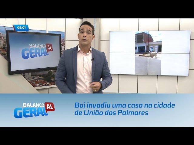 Boi invadiu uma casa na cidade de União dos Palmares