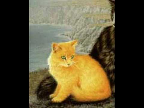 Gatto giallo Yellow cat