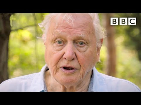"David Attenborough: ""We need IMMEDIATE action to stop extinction crisis!"" - BBC"