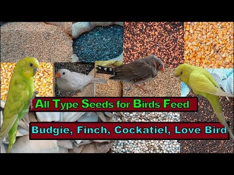 All Type Seeds For Birds Feed In This Market