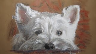 Speed Painting Westie In Acrylics And Colored Pencil