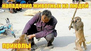 Нападение животных на людей +от mangekaj