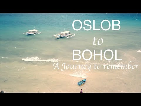Oslob to Bohol | A Journey To Remember