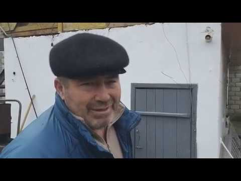 #Голуби #Чечни.   Голуби  Амхадова Лом-Али  в Грозном! 89640717441