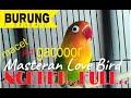 Burung Lovebird Gacor Ngekek Panjang Lovebird Ngekek Ini Banyak Lovebird Lain Yg Ikut Ngekek Ngerol  Mp3 - Mp4 Download