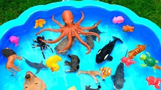 Learn Colors with Sea Animals and Wild Animals Names Sharks For Kids