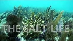 Salt Life Food Shack Jacksonville Beach :30 Spot