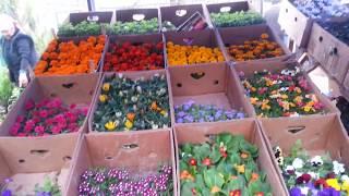 Юж Казахстан  Шымкентский крытый рынок цветочные ряды