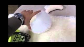 Lovely White Pomeranian