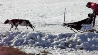 Dueling Sled Dog Teams In Laconia Derby 2009