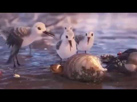Piper (2016) - Short Film - Disney Pixar