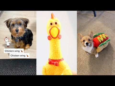 Chicken Wing funny video Cat And Dog Compilation – funny dog tik toks
