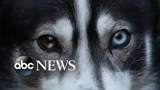 Sled Dog Rally, Year of the Rat, the World Economic Forum: World in Photos, Jan. 21