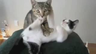 Супер ПРИКОЛ кошачий массаж