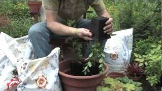 Organic Mechanics Soil Co. Presents // How To Plant A Mixed Container