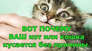 ВОТ Почему ВАШ кот или кошка кусается без причины.
