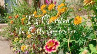 《9月上旬の庭から》ガーデニング*秋の花の植え付けから1週間後の様子《T's Garden》