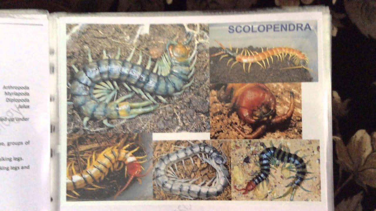zoology practical visual manual youtube rh youtube com Zoology Class Marine Biology