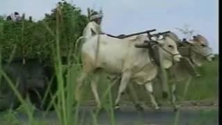 hadoti paryavaran
