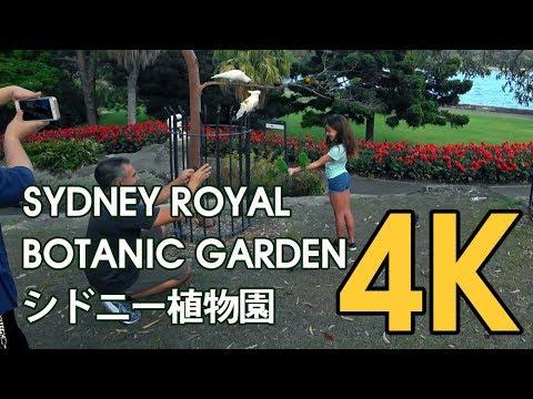 【4K SYDNEY AUSTRALIA】 Walking Trail Wooloomooloo to Royal Sydney Botanic Garden : TOUR 2018 シドニー