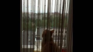 Кот Пушкин разговаривает с птицами