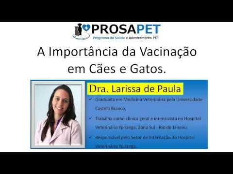 [PROSAPET] Larissa de Paula e a Importância da Vacinação em Cães e Gatos