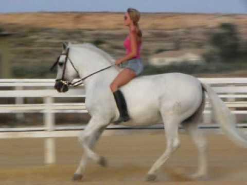 Mi gordo el caballo mas bonito del mundo tkm natalia for El bano mas bonito del mundo