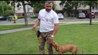 Kutyaiskola 3.-A jutalomfalat szerepe a kutyanevelésben