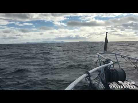 Marine Biologie Ausflug