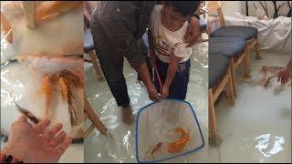 Giới trẻ Sài Gòn tranh cãi về quán cà phê cho hàng trăm chú cá chép bơi khắp... sàn nhà