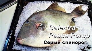 Серый спинорог рецепт в духовке. Pesce Balestra ricetta nel forno.