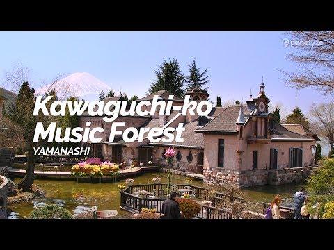 Kawaguchi-ko Music Forest,Yamanashi | Japan Travel Guide