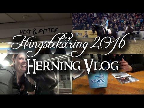 Hingstekåring 2016 - Herning Vlog