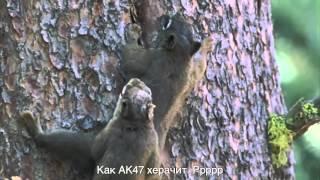 Планетуха Земля  Куница и Белки   Plizzanet Earth Marten and Squirrels RUS