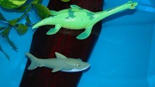 Динозавр и акула. Плезиозавр берегись акулу! Мультик для детей